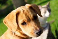 photo wallpaper - dog